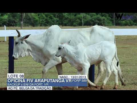 LOTE 08   FORP 589