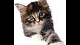 Ankara'da Kafası Ezilerek Öldürülen Kedi