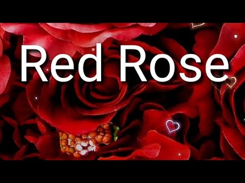most-beautiful-red-roses-🌹
