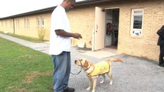 Prison Puppies - Incarcerated Veterans Train Dogs For Wounded Vets