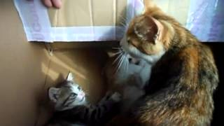 Кошка с котятами - эмигрировала в Рязань.