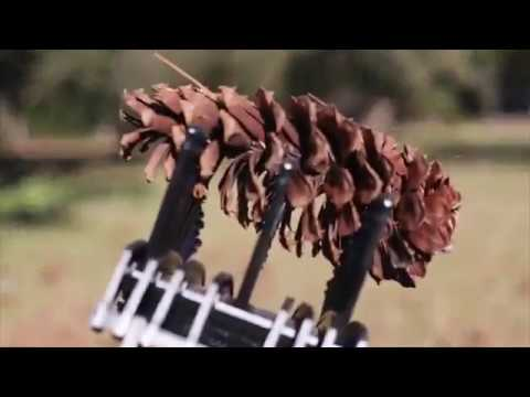 Pick Up Pine Cones With The Stab A Nut Pine Cone Picker Upper From