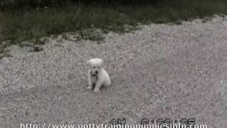Potty Training Puppies New Puppy Puppy Training Puppy Crate Training