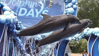 Dolphin Days (Full Show) at SeaWorld Orlando on 5/19/17