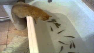 Два кота ловят рыбу в ванной.