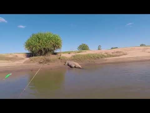 Гигантский Крокодил пугает Рыбаков в Западной Австралии
