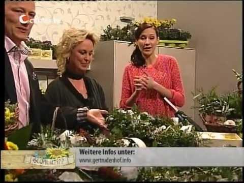 Osterkranz Basteln Das Gertrudenhof Blumentipp Special Bei Center