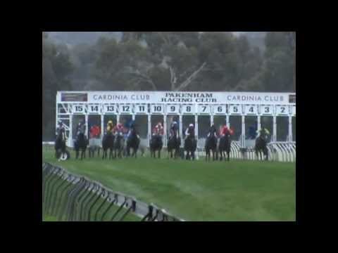 Horses racing start at Pakenham Vic. (21-5-2013)