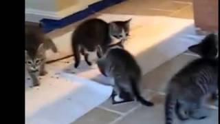 Котята просят еды.