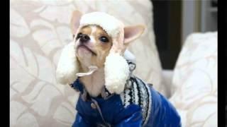 шапки для собак маленьких