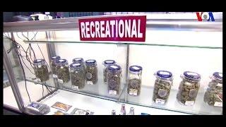 EU: También votarán por legalizar mariguana en California y cuatro estados más (Video)
