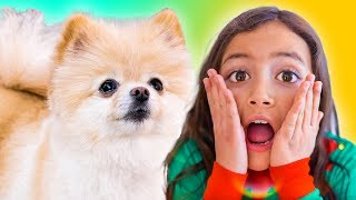 Puppy I Love You | The Best Cute Songs for the Family