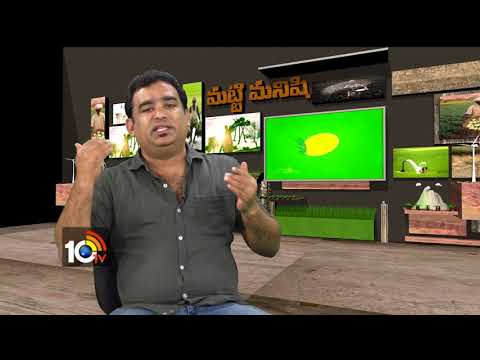 Matti Manishi | High yield In Rice Crop | Special Cultivation Tips | 10TV