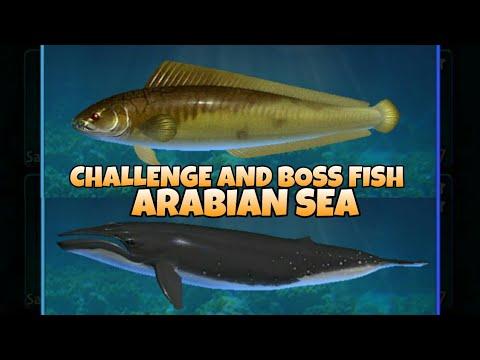 Fishing Hook / Kail Pancing   Challenge And Boss Fish Arabian Sea
