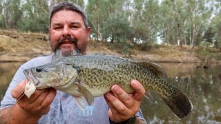 Murray cod fishing with chicken as bait