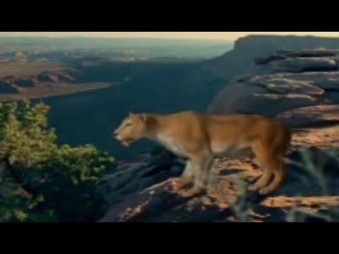 Lion King - Can You Feel The Love Tonight from YouTube · Duration:  3 minutes 28 seconds