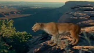 BBC: Saber Tooth Cat Prey - Ice Age Death Trap
