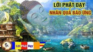 Lời Phật Dạy về NHÂN QUẢ BÁO ỨNG cực hay - Nghe Mỗi Đêm An Lạc Ngủ Ngon | Phật Pháp Nhiệm Màu