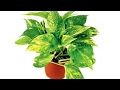 Top 3 Indoor plants Create Positive energy in your home