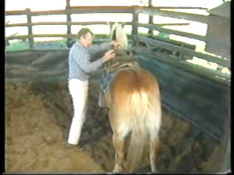 Bucking Horses Part 2 of 4