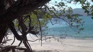Джунгли.Путешествие в Коста-Рику (Живая природа HD)