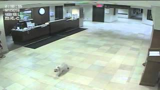 Loyal Dog Finds Hospital On Her Own To Visit Her Sick Human | DOGS YOU SHOULD KNOW ABOUT