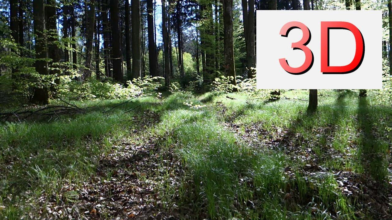 Ultra HD 3D Film: APRIL FOREST WALK (4K Resolution)