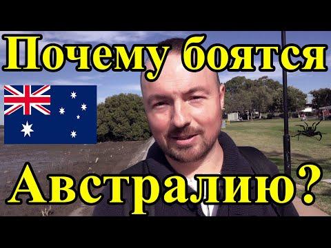 Вопрос: Сколько видов насекомых в Австралии и в Республике Беларусь?