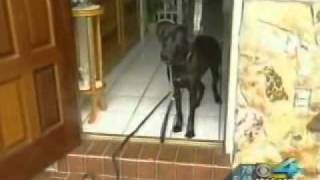 Miami Dog Whisperer Dog Training Tip: How To Save Your Dogs Life With One Simple Command!