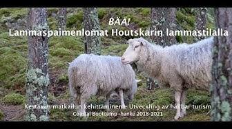 BÄÄ! Lammaspaimenlomat Houtskarin lammastilalla