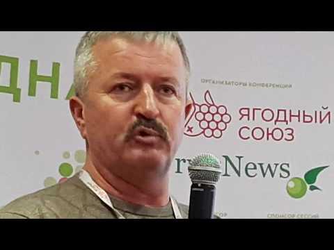 Вопрос: Где собирать лесную землянику в Казани, Татарстане Какие места?
