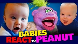 BABIES REACT to PEANUT | JEFF DUNHAM