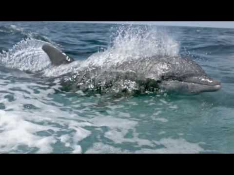 Richard Hammond's Invisible WorldsDolphins vs Humans