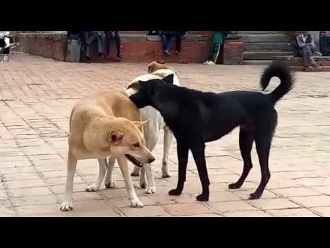Dog sex OhYeah!