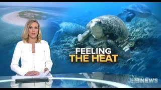 Global Warming Scamists WWF Claim Coming Turtle Wipeout.(Barrier Reef) Nine News