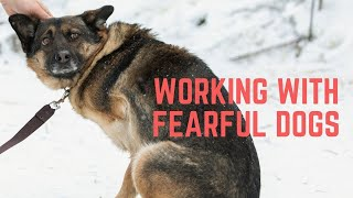 Training Fearful Dogs | Using The Round Pen Technique | Grassroots K9