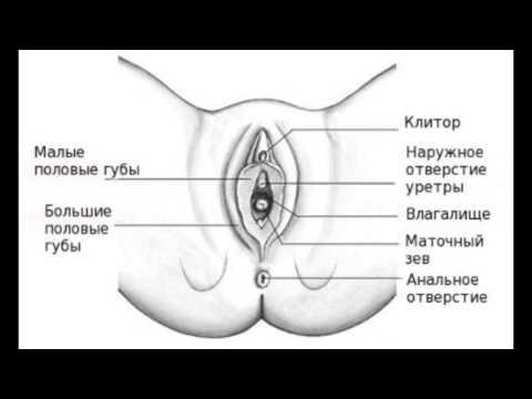 размер зависит ли Петрозаводск члена