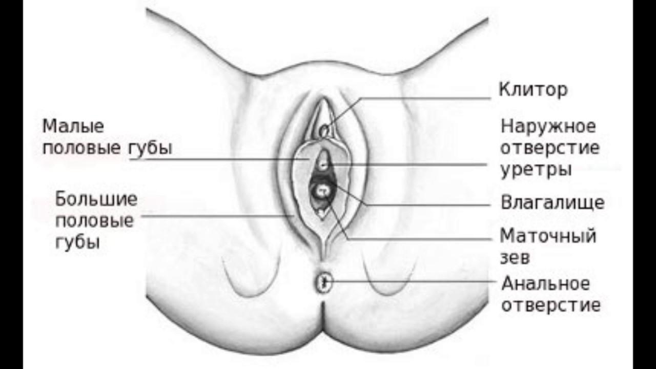 Оргазм клитор влагалище оргазм