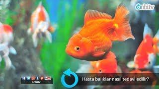 Hasta balıklar nasıl tedavi edilir?