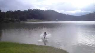 Обучение бегу по воде / Training run on water