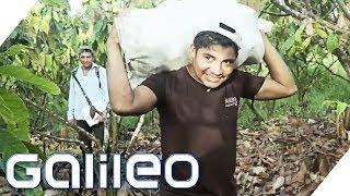 Warum Kakaoernte immer noch Handarbeit ist | Galileo | ProSieben
