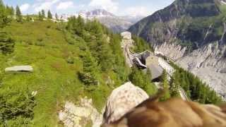Animal Clip Of The Week- Dope Flying Eagle's Point Of View!
