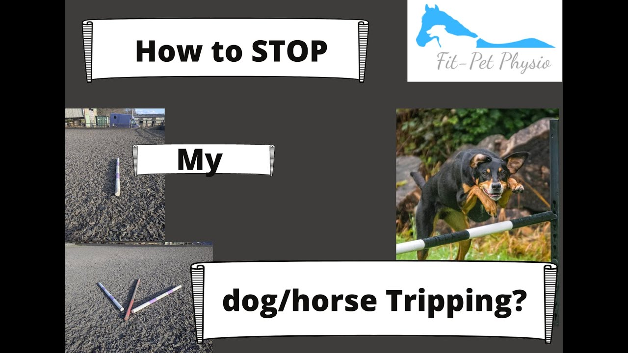 How do I stop my dog or horse from tripping?