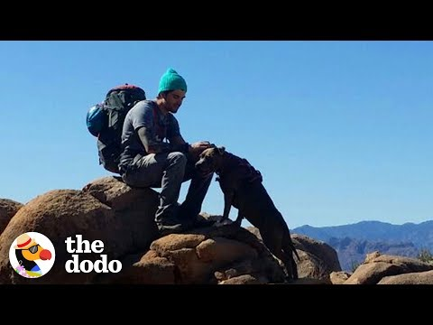 Hike With The World's Most Resilient Pittie | The Dodo Airbnb Experiences from YouTube · Duration:  1 minutes 24 seconds