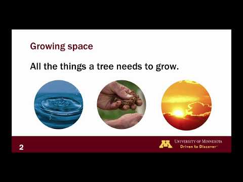 Silviculture: Growing Space