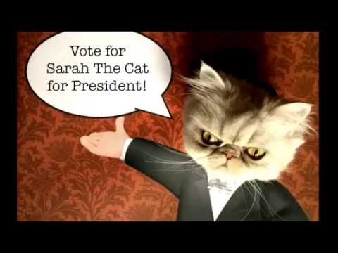 Sarah The Cat for PRESIDENT!