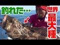 怪獣フィッシュと呼ばれる魚が釣れた【アラスカ編#2】