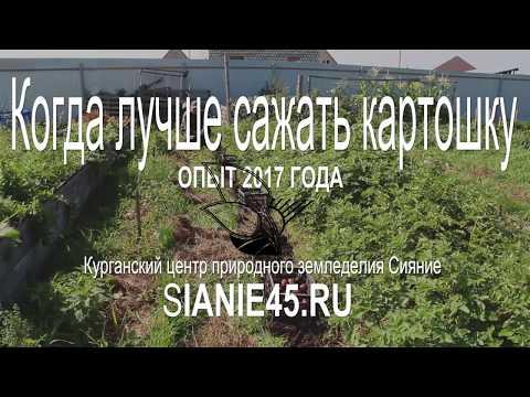 КОГДА ЛУЧШЕ САЖАТЬ КАРТОШКУ | сияниекурган | земледелие | природное | картофель | экодача | посадки | сроки