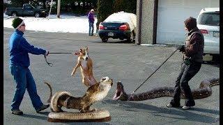 भूल कर भी नहीं पालना ऐसे पालतू जानवर | MOST UNUSUAL PETS IN THE WORLD.