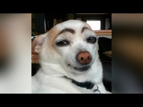 Funny Dogs Compilation - Funny Dogs Fail 2016 NEW HD [Most See] Funny Dog Videos Ever Part 1